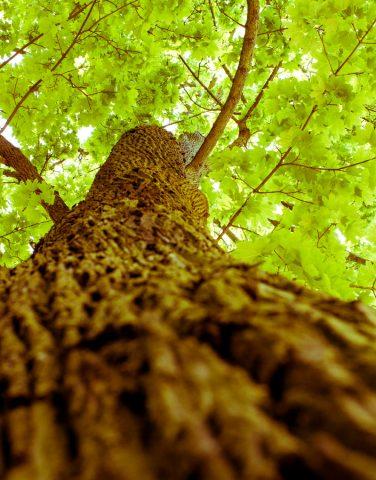 entspannen-im-Spreewald-unter-dem-Kastanienbaum
